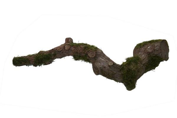 Wurzelast ca. 21cm