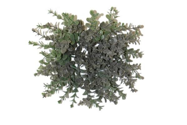 Eukalyptus Busch rund ca. 25cm
