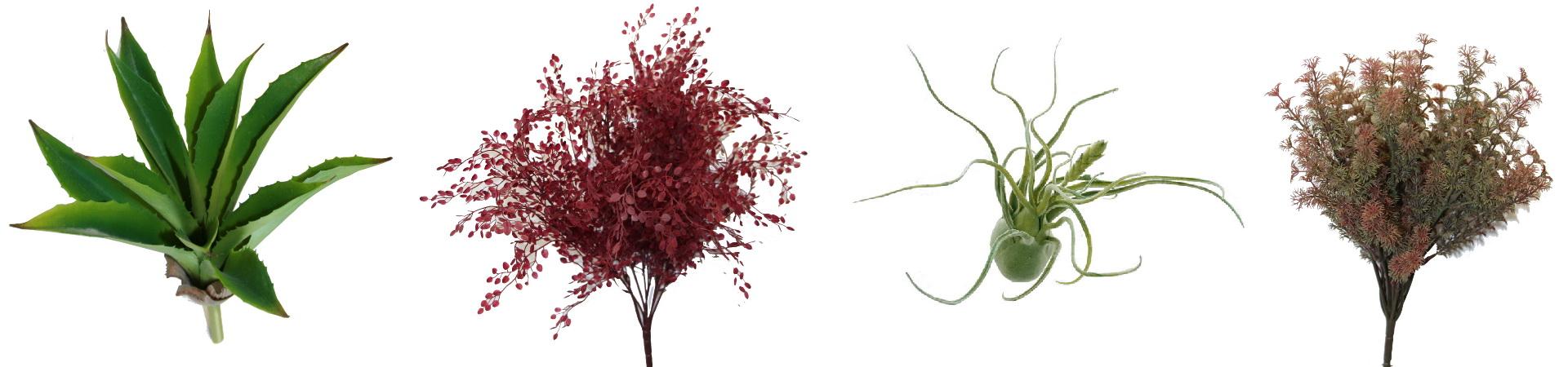 Les Plantes à Tige et Plantes sur socle