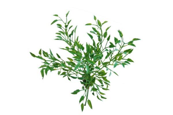 Wisteria Busch grün ca. 20cm