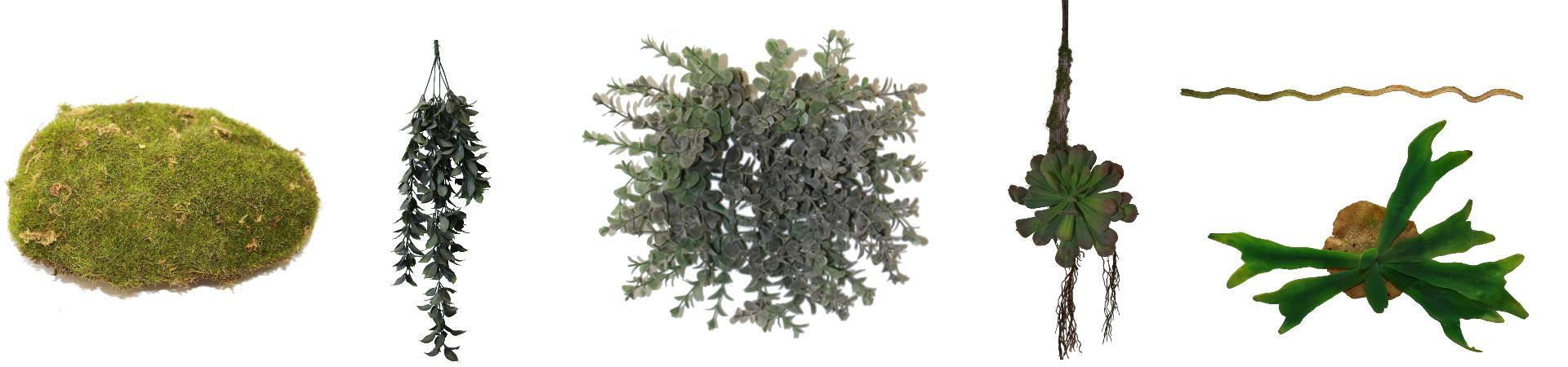 Plantes suspendues et lianes