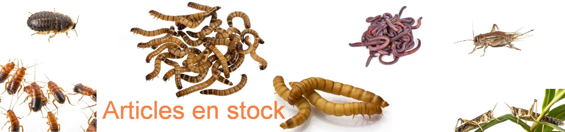 Insectes en stock