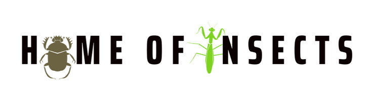 Home of Insects