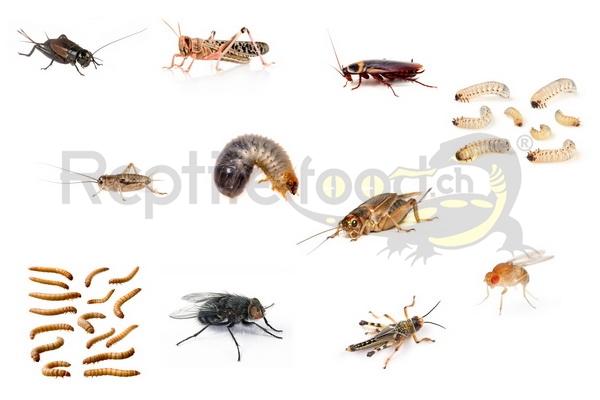 alleinsekten