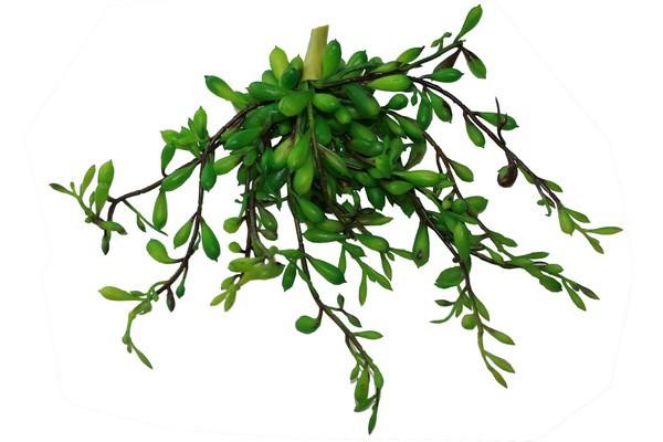 Sedum Bush Green ca. 16cm